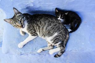 Gatos practicando o coleito!